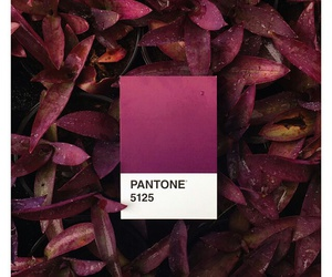 rouge, violet, and pataton image