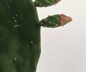 cacto, cactus, and green image