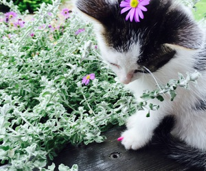 cat, garden, and holly image