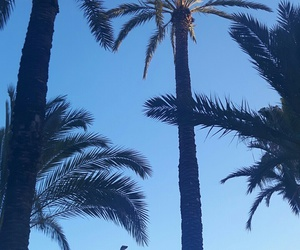 green, palm, and spain image