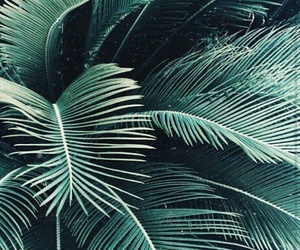 palms, plants, and nature image