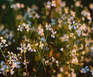 analog, flowers, and garden image