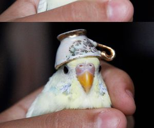 cute, bird, and funny image