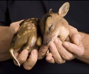 animal, hands, and animals image