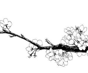 black and white, flowers, and manga image