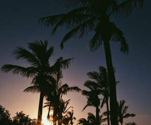 holiday, lanzarote, and palms image