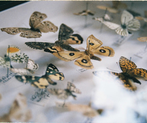 35mm, analogue, and butterfly image