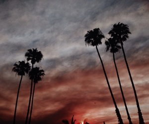 beauty and palms image