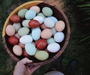 chickens, country, and farming image