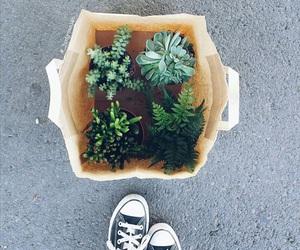 chuck taylors, converse, and plants image