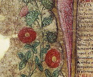 rose and thistle image