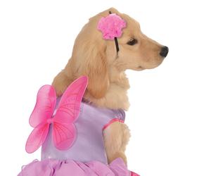 pet costume pixie pup md image
