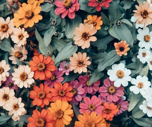 flowers, nature, and wallpaper image