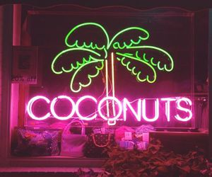 neon, pink, and coconuts image