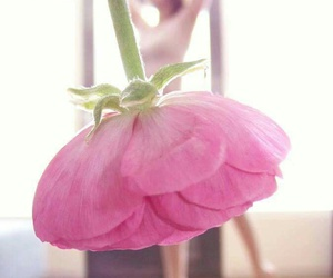 flowers, pink, and dance image