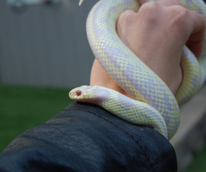 adorable, reptile, and serpent image
