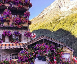 flowers, spring, and suiza image