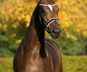 autumn, bridle, and brown image