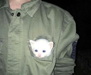 cat, tumblr, and grunge image