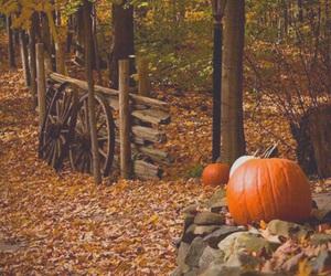 ai, gfd, and autumn image