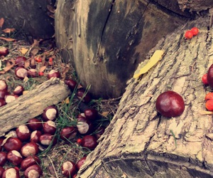 autumn, brown, and chestnuts image