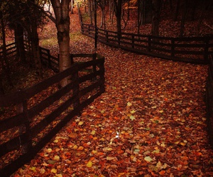 aesthetic, autumn, and beautiful image