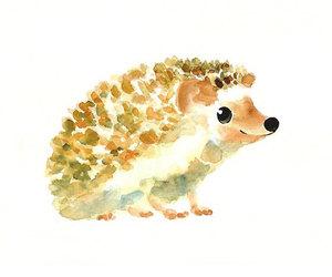 hedgehog, cute, and animal image