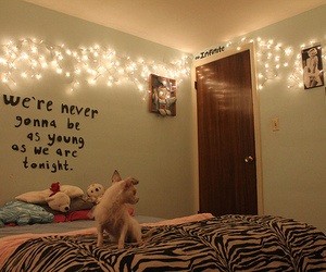 light, dog, and room image