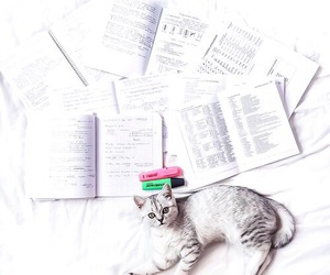 cat, cours, and organisation image