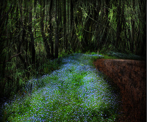 blue flowers, explore, and fairy image