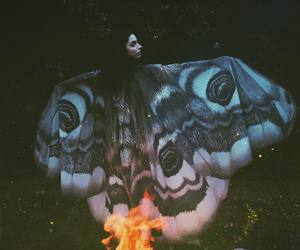 butterfly, fire, and forest image