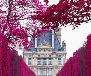 travel and flowers image