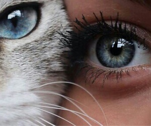 blue, cat, and eyes image