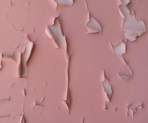 pink, rosa, and wall image