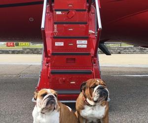 airplane, bulldog, and plane image