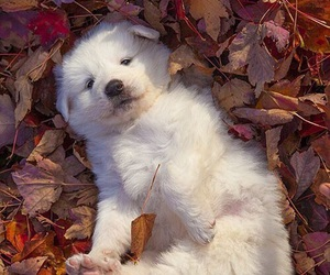 autumn, dogs, and leaves image