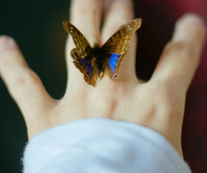 butterfly, hand, and magic image