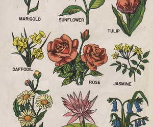flowers, rose, and art image