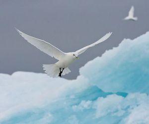 aesthetic, gull, and bird image