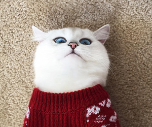 aesthetic, cat nose, and blue eyes image