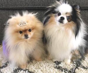 dog, princess, and fluffy image