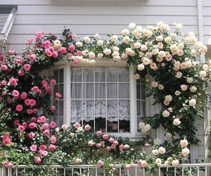 flowers, window, and house image