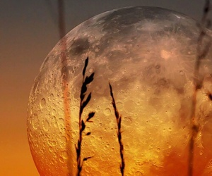 moon and nature image