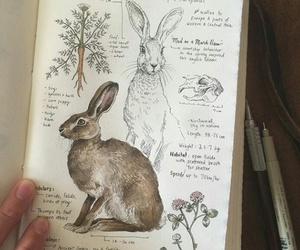 art, hare, and sketch book image