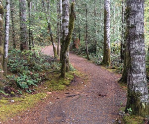 forest, hiking, and pacificnorthwest image