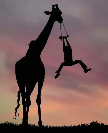 giraffe image