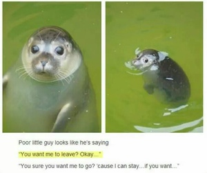 funny, cute, and animal image