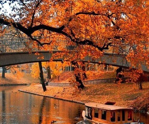 autumn, fall, and leaves image
