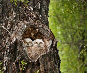 hearts, owls, and trees image