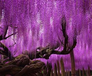 flower, violet, and visteria image